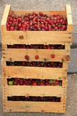 Cherries at a French market — Stock Photo