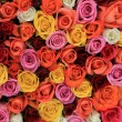 Multicolored wedding roses — Stock Photo #58249671