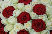 Red and white roses in a wedding arrangement — Stock Photo