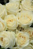 White roses in bridal bouquet — Stock Photo