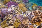 Coral reef and water — Stock Photo