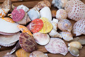 Different shells closeup — Photo