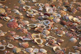 Different shells on sand — Stock Photo