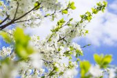 Spring tree background — Stock Photo