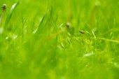 Colorful green Grass — Stock Photo