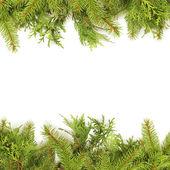 Boże Narodzenie zielony ram — Zdjęcie stockowe