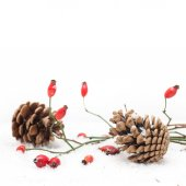 Winter background with red berries — Stock Photo