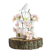 Spring flowers in  birdcage — Stock Photo