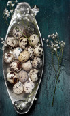 Easter composition of quail eggs — Stock Photo