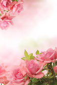 Card with pink roses — Stock Photo