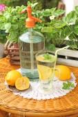 Homemade lemonade with fresh citruses — Stock Photo