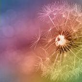 Colorfull dandelion — Stock Photo