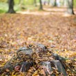 Fall forest landscape — Stock Photo #57740375