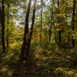 Magical forest — Stock Photo #57740507