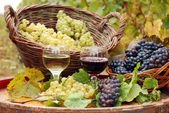 Red and white wine with grape autumn season — Stock Photo