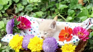 Cute kitten in basket with flowers — Stock Video