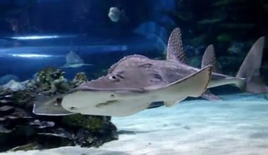 Shark swimming underwater closeup — Stock Video