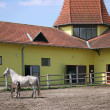 Lipizzaner mare and foal on ranch — Stock Photo #54951717