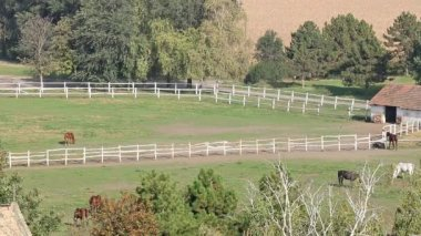 Horses on farm aerial view — Stock Video