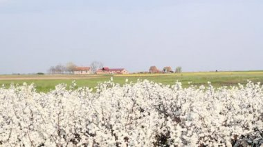 Landbouwgrond — Stockvideo