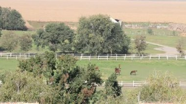 Horses on pasture country landscape — 图库视频影像