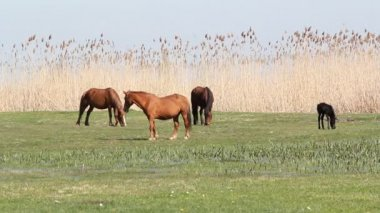 Horses on pasture — Stock Video