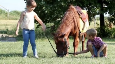 Children play with pony horse — Stock Video