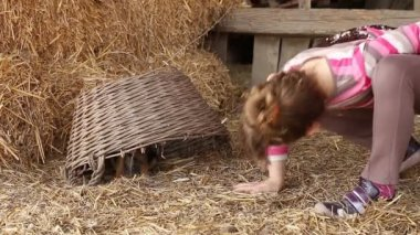 Little girl play with puppy pet — Stock Video