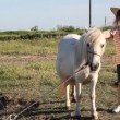 Little girl with cowboy hat and pony horse — Stock Video #56819327
