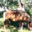 Little girl with pony horse and foal — Stock Video #56822983