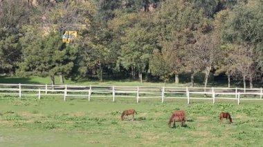 Horses on pasture rural landscape — Stock Video