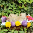 Two kittens in wicker basket with flowers — Stock Photo #57894911