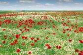 Wild flowers meadow landscape spring season — Stockfoto