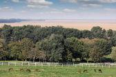 Pferde auf Bauernhof Ackerland Landschaft — Stockfoto