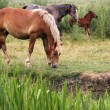 Horses and foal on pasture — Stock Photo #69089059