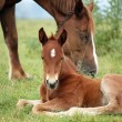 Foal and horse on pasture — Stock Photo #70467569