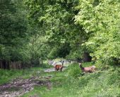 Two deer doe in forest nature wildlife — Stock Photo