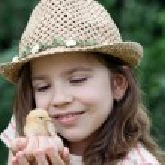 Beautiful little girl and cute yellow chicken — Stock Photo #74719351