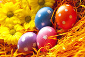 Colored Easter eggs in the nest — Stock Photo