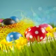 Colored Easter eggs and daffodils on blue background — Stock Photo #67805923