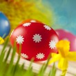 Colored Easter eggs and daffodils on blue background — Stock Photo #67805957