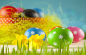 Colored Easter eggs and daffodils on blue background — Stock Photo