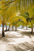Fresh Look Palm Trees at Beach — Stockfoto
