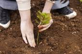 Planting tree in the garden   — Stock Photo