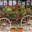Ox Cart with Flowers in Veliko Tarnovo Bulgaria — Stock Photo #60200647