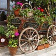 Ox Cart with Flowers in Veliko Tarnovo Bulgaria — Stock Photo #60201357