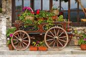 Ox Cart with Flowers in Veliko Tarnovo Bulgaria   — Stock Photo