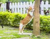Cute cat standing and putting paws on branch of tree — Stock Photo