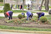 Kislovodsk. Work of workers engage in planting flower — Stock Photo