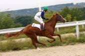Carreras de caballos. — Foto de Stock